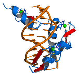 512px-Zinc_finger_DNA_complex
